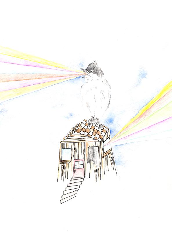 oct-16bird-1