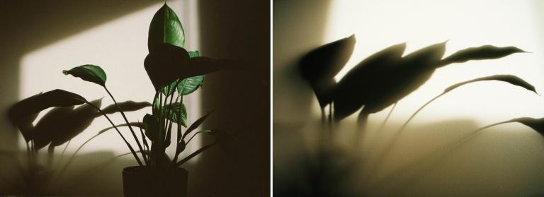 plant-shadow